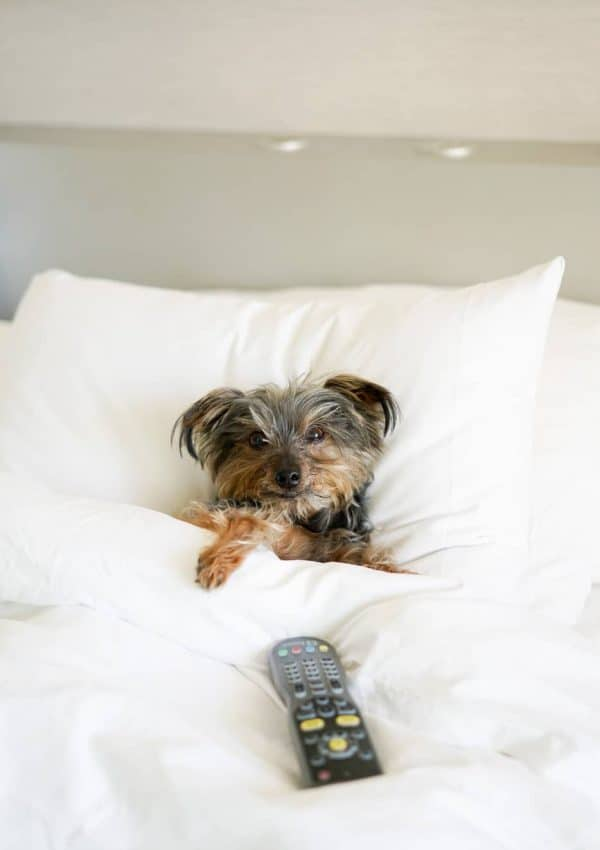 Puppy Approved: Radisson Blu Aqua Review