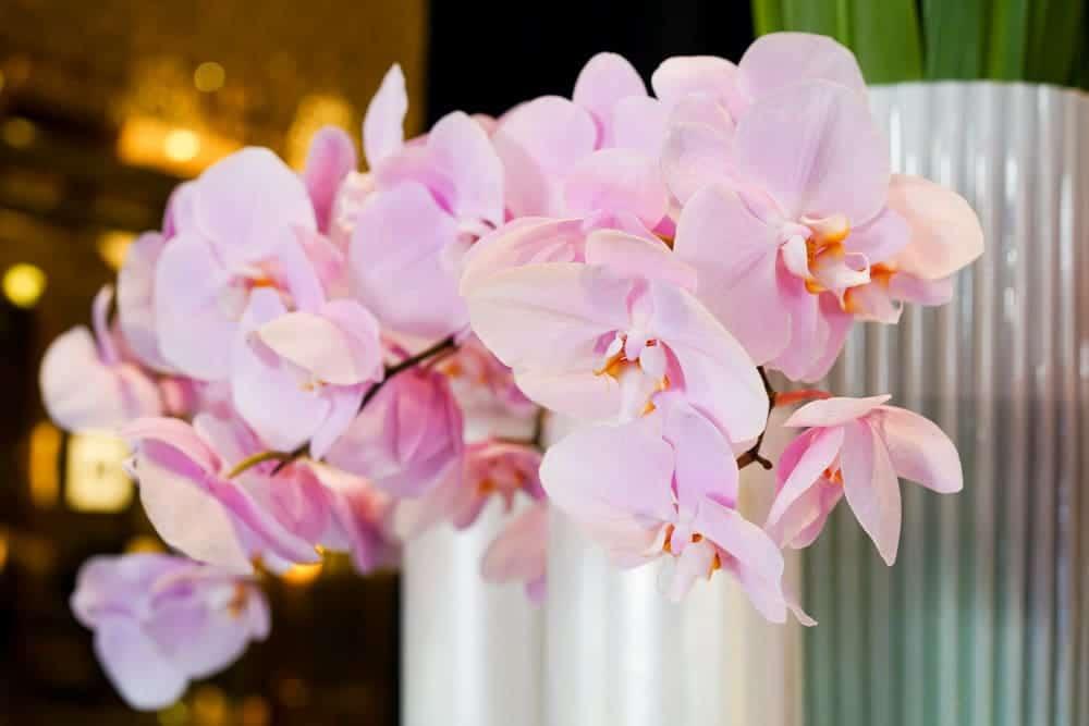 Radisson Blu Aqua, Radisson Blu Aqua Review, Chicago Pet-friendly Hotels, A Lily Love Affair, Chicago Blogger