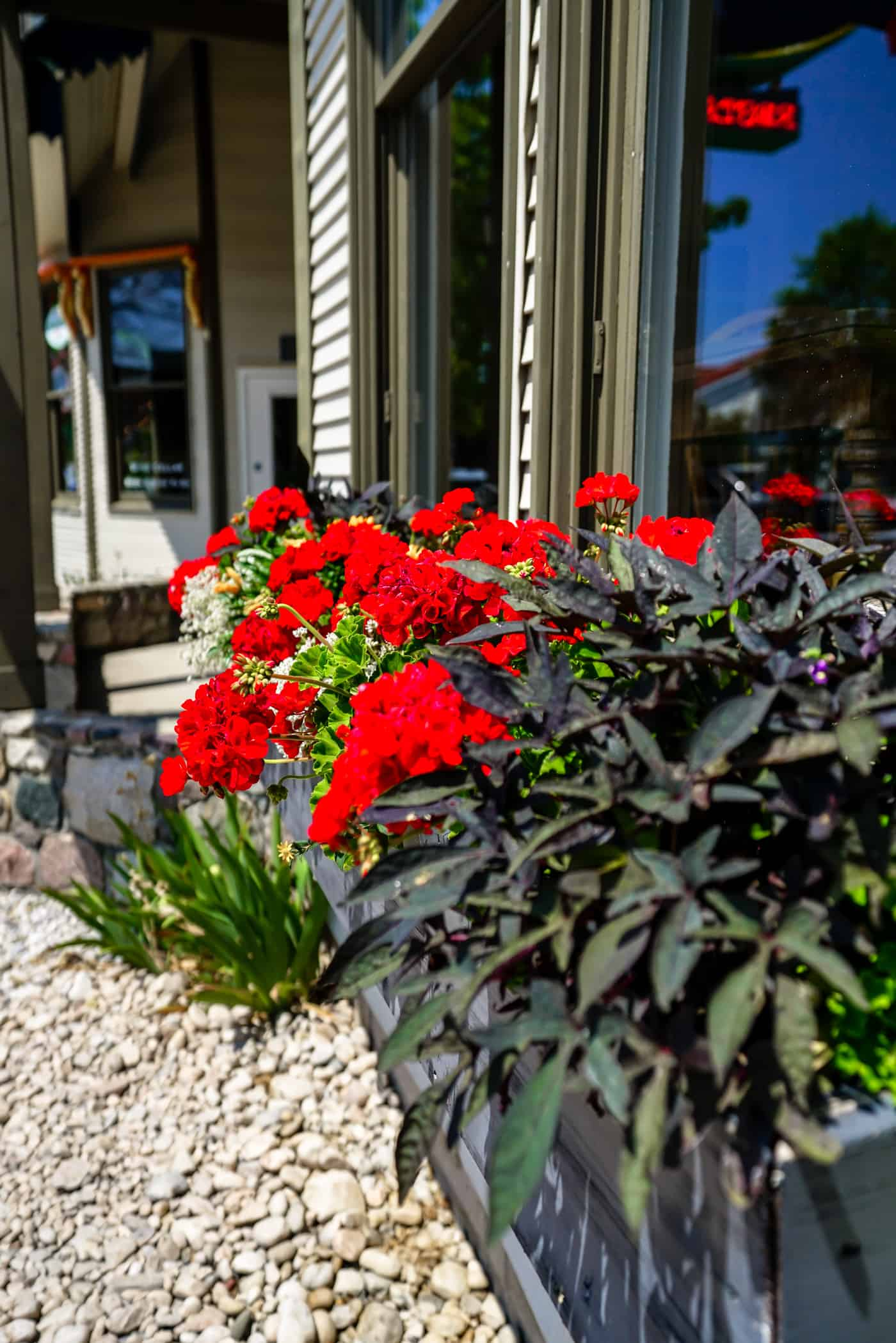 Beautiful red flowers in downtown frankfort michigan