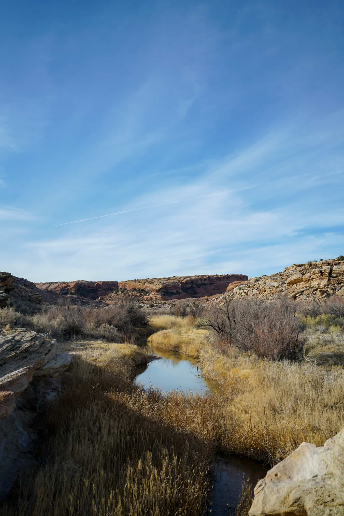 A field along the Colorado River in Moab Utah.